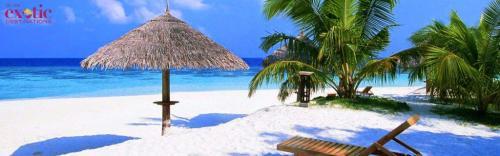 Best Travel Company for Sri Lanka Honeymoon Packages.