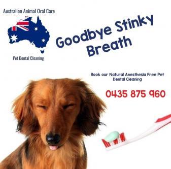 Dog Teeth Cleaning