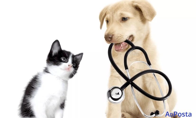 Trusted Veterinary Clinic in Victoria